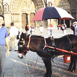Louis at Notre Dame with donkey