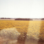 Scenes from train